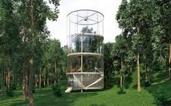 Nhà bọc quanh cây - giải pháp cho người yêu thiên nhiên và kiến trúc độc lạ