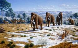 Nga nuôi ý định xây dựng công viên dành cho thời đại voi ma mút