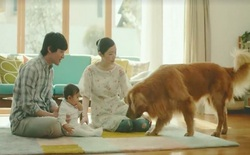 Bằng ánh mắt của một chú chó, Amazon đã tạo ra đoạn quảng cáo quá đỗi ấn tượng