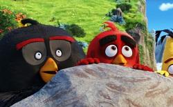 Toán học chứng minh các chú chim cáu trong phim Angry Birds bé hơn trong game