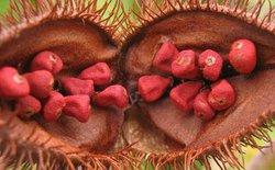 Loại hạt làm phẩm màu này có thể ngăn chặn được ung thư da