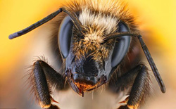 """Siêu chiến cơ F-22 bị 20.000 con ong mật """"củ hành"""""""