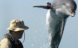 Đặc công cá heo là có thật và chúng đã nâng tầm quân sự lên nấc cao mới