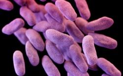 Siêu vi khuẩn cứ 3 giây lại giết chết một người