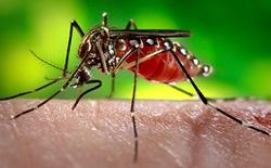 Nhiều điểm du lịch lừng danh bị ảnh hưởng vì virus Zika