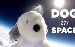 Một chú chó bông vừa mất tích ngoài không gian, bạn sẽ được thưởng lớn nếu tìm ra