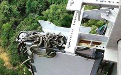 Phát hoảng với tổ rắn trên tháp thu phát sóng