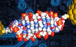 Đi-ốt làm từ DNA nhỏ nhất thế giới, nhỏ gấp 1000 lần bình thường, tương lai máy tính là đây