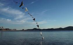 Xem drone thế hệ mới, có khả năng vừa bơi vừa bay