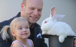Chuyện chỉ có ở Úc: phạt gần 50.000 USD nếu nuôi thỏ không xin giấy phép