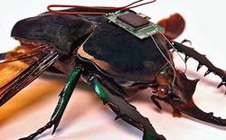 Cyborg Insect: Gắn chip lên lưng côn trùng, bắt chúng tuân theo mệnh lệnh của con người