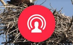 Facebook sắp cho phép livestream vĩnh viễn, hết đời cũng được nhưng không cho lưu lại
