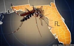 Mỹ thăm dò ý kiến về việc sử dụng muỗi biến đổi gen để tiêu diệt muỗi truyền bệnh Zika