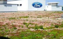 Hãy xem Ford đã biến mái nhà máy của mình thành thảm sinh vật sống độc đáo vô cùng như thế nào