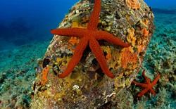 5 sự kiện chứng minh đại dương đang chuyển mình theo hướng con người không thể hiểu nổi