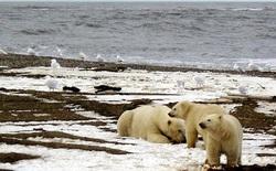 Nhiệt độ cao bất thường ở Bắc Cực đang làm băng tan nhanh hơn dự kiến