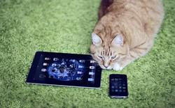 Chuyện lạ Facebook: Chia sẻ ảnh mèo, khóa ngay tài khoản?