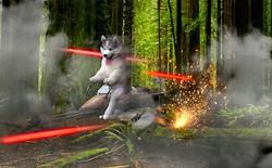 Chú chó Husky bị mắc kẹt trên cây dừa với khuôn mặt hớn hở bị cư dân mạng chế ảnh tơi bời