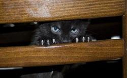 Làm thế nào mà anh chàng này biến một chú mèo ngây thơ thành vũ khí hack được Wi-fi hàng xóm?
