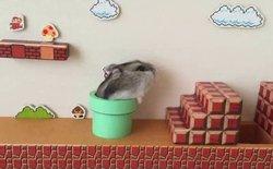 Xem chuột hamster đóng vai Mario đi, buổi chiều mệt mỏi của bạn sẽ tan biến ngay lập tức