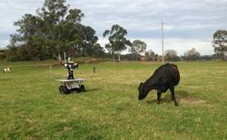 Nông dân chăn bò sẽ lo ngại bị con robot này cướp mất việc