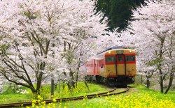 19 bức ảnh lý giải vì sao Nhật Bản có tới 2 thành phố đáng sống nhất thế giới