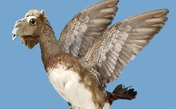 """Cư dân mạng hốt hoảng: Thực hư """"Lạc đà là loài chim lớn nhất thế giới""""?"""