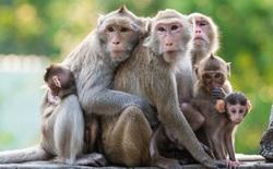 Đôi lúc ý tưởng của bạn bị vùi dập không biết tại sao? Hãy đọc câu chuyện về 5 con khỉ này