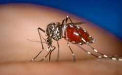 Sân bay Đà Nẵng xuất hiện muỗi truyền bệnh Zika