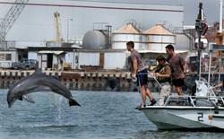 Căn cứ hải quân Mỹ dùng cá heo để bảo vệ kẻ xâm nhập