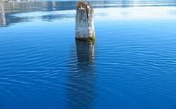Thân cây nổi thẳng đứng suốt 120 năm, chưa ai có thể lý giải điều này!