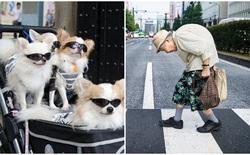 Ở Nhật chó mèo nhiều hơn trẻ con, bảo sao người già 80 tuổi vẫn phải làm việc