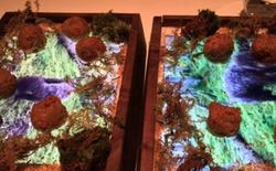 Nhà hàng sang chảnh tại Mỹ phục vụ đồ ăn trên iPad