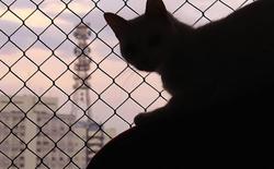 Liệu mèo có phải gián điệp ngoài hành tinh?