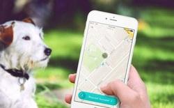 Chuyện lạ khó tin: Đã có ứng dụng nhặt phân chó