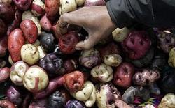Peru chuẩn bị đưa 100 giống khoai lên Sao Hỏa