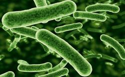 Siêu vi khuẩn phát triển trong hệ thống nước thải có thể tích tụ trên thực phẩm chúng ta ăn