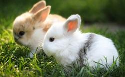 Bạn sẽ không thể tin nổi một sai lầm nhỏ này đã đẻ ra 10 tỷ con thỏ