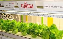 Vì sao hàng loạt đại gia công nghệ Nhật Bản đi bán rau?