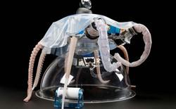 """Con robot bạch tuộc này có thể di chuyển linh hoạt như """"hàng thật"""" và sẽ là tương lai của ngành robot"""