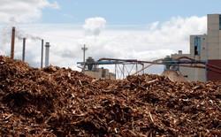 Bill Gates vừa đầu tư 14 triệu USD vào công nghệ biến mạt gỗ thành xăng
