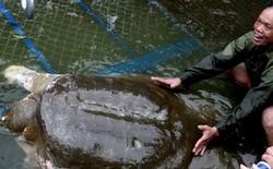 Trái đất chỉ còn ba con rùa cùng loài cụ rùa hồ Gươm