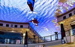 Bước vào khu trung tâm mua sắm này bạn sẽ chìm ngay xuống lòng đại dương