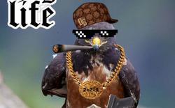 Chú diều hâu cool-ngầu gây ra cuộc chiến Photoshop dữ dội trên Internet