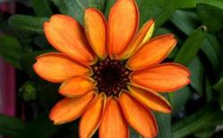 Đây là bông hoa đầu tiên nở ngoài vũ trụ