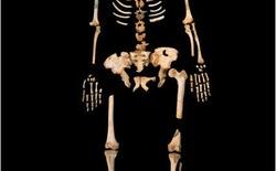 Tìm thấy ADN người cổ xưa nhất có thể viết lại lịch sử tiến hóa của loài người