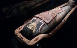 Phát hiện xác ướp 2.200 năm tuổi mắc bệnh béo phì do ăn nhiều đường, ngồi lắm lại không luyện tập