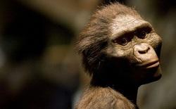 Phát hiện mới: Lucy, tổ tiên của loài người tử vong do ngã cây