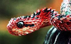 Đây là lý do tại sao loài rắn không có chân