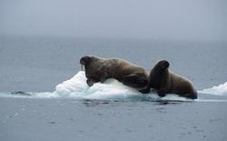 Quân đội Canada được cử đi điều tra tiếng động lạ được cho là phát ra từ đáy biển